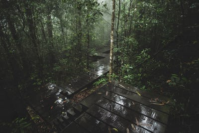 view of tropical forest, Khao Yai National Park, Thailand