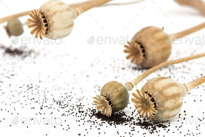 Dried poppy boxes and spilled seeds, isolated on white background