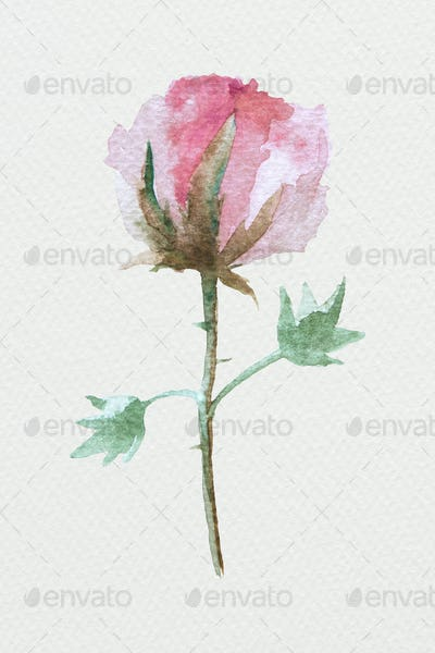 Colorful watercolor natural flower illustration