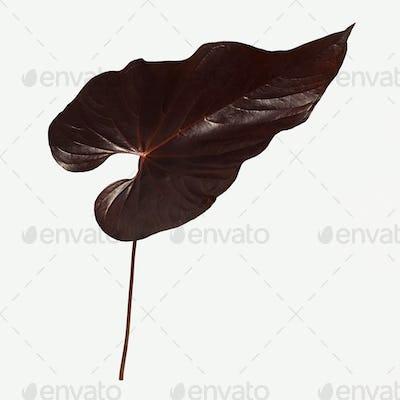 Tropical dark brown Alocasia leaf mockup