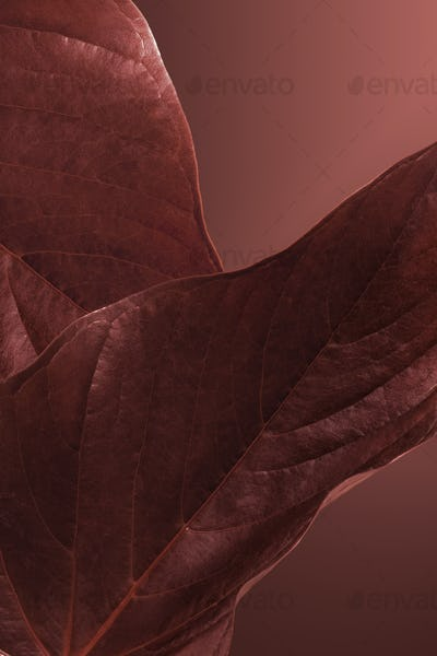 Heart shaped brown Alocasia leaves mockup