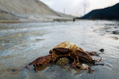 Part of dirty road with trash in puddle or polluted river surrounded by hills and industrial pipes