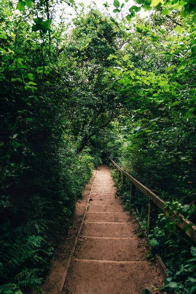 Wooden stairs in amazing green forest