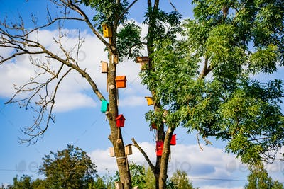 Many colorful bird houses on a tree. Nature care concept