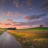 Sunset landscape in Maremma. Road and Rolling Hills. Bibbona,Tuscany, Italy