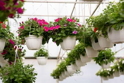 Flowering season, spring, summer modern smart greenhouse and sale