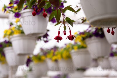 Flower farm in modern smart greenhouse in city, cultivation and care in garden
