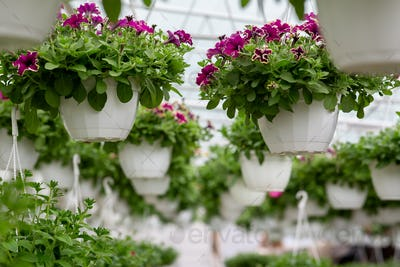 Decorative plants for garden, park and home, business in city