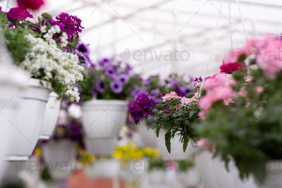 Botanical garden, production and cultivation of flowers, care and sale