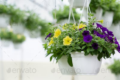 Botany, cultivation, plants business, exhibition and smart greenhouse
