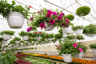 Botanical, smart orangery in blooming season, beautiful exhibition indoors