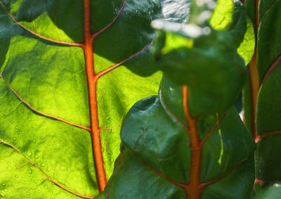 Sunlight and shadow on the vegetable leaves