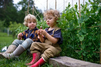 Portrait of two small children in vegetable garden, sustainable lifestyle.