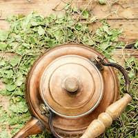 Orthilia in herbal medicine