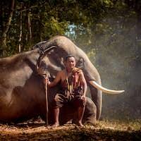 Elephant at sunrise in Thailand