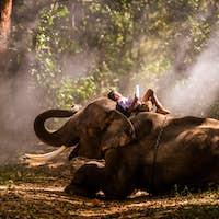 Elephant and school boy in Thailand
