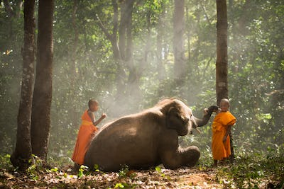 Elephant and buddist monchs in Thailand