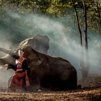 Elephant and woman in Thailand