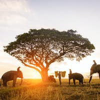 Elephants at sunrise in Thailand
