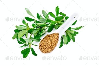 Fenugreek with green leaves in spoon top