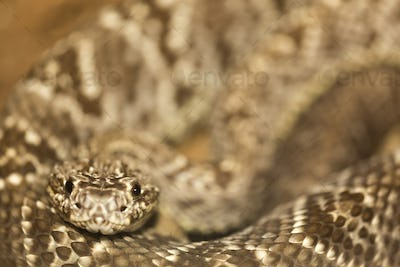 Close-up of a snake in Costa Rica