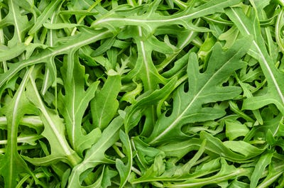 Raw and fresh arugula, rocket salad, green leaves, from above