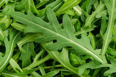 Arugula, rocket salad, green leaves, close-up, from above
