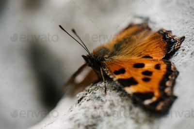 close-up shot of beautiful butterfly sitting on stone