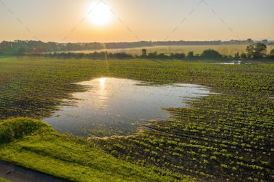 Flooded agricultural field with growing plants in spring nature