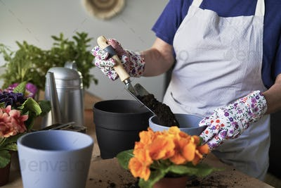 Woman taking care of her houseplants