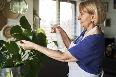 Senior woman taking care about plants at her house