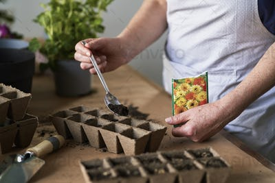 Close up of planting seedlings