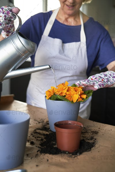Close up of woman watering freshly planted flowers