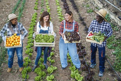 Multi generational farmer team holding wood boxes with fresh organic vegetables - Focus on faces