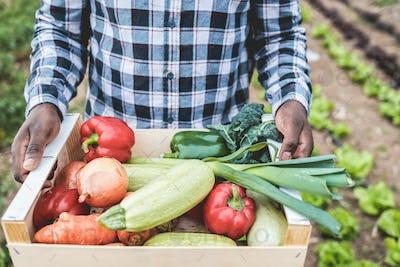 African farmer man holding wood box with fresh organic vegetables