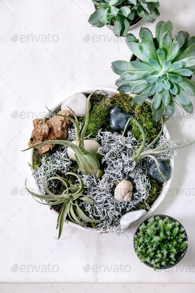 Tillandsia air and different succulent plant in ceramic pots