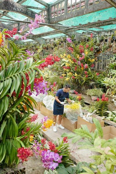 Worker checking delivered plants