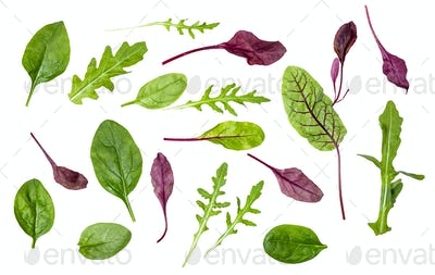 different leaves of leafy vegetables isolated