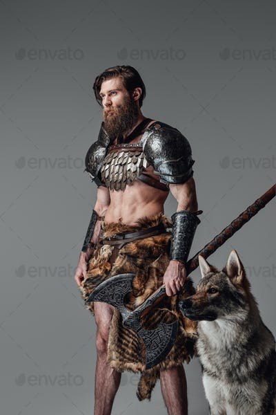 Powerful viking with axe and wild wolf moving away in gray background