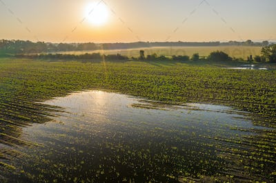 Sun rising over a green agricultural field with a splash filled with water