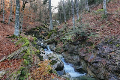 Gorgeous forest in Gamueta forest, Aragonese pyrenees, Huesca province, Spain