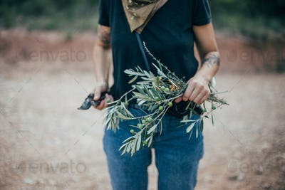 Woman hold olive tree branch in sunset