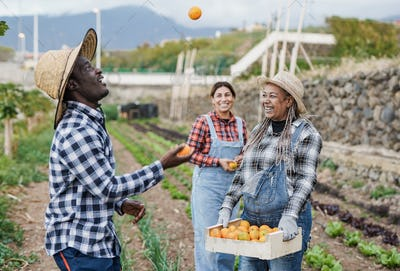 Multiracial people having fun with fresh orange fruit during harves period