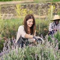 Happy mature caucasian woman gardening - Multiracial people working at farm
