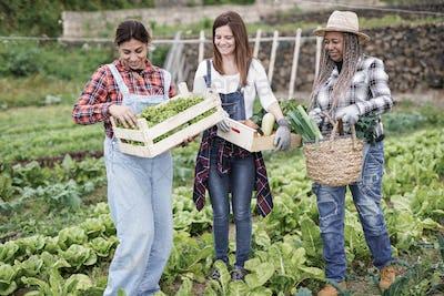 Multiracial gardening women with fresh vegetable working inside farm - Harvesting period