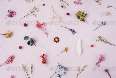 Floral pattern from dried flowers on pink.