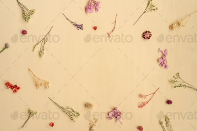 Floral pattern from dried flowers on beige.