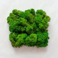 Natural green moss texture background.