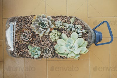 Recycled pot full of succulent plants