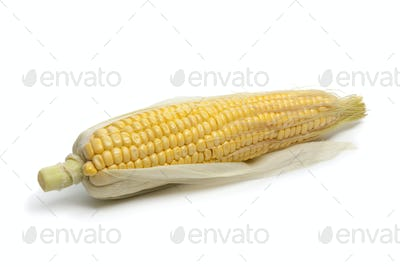 Whole Fresh yellow sweet corn on the cob